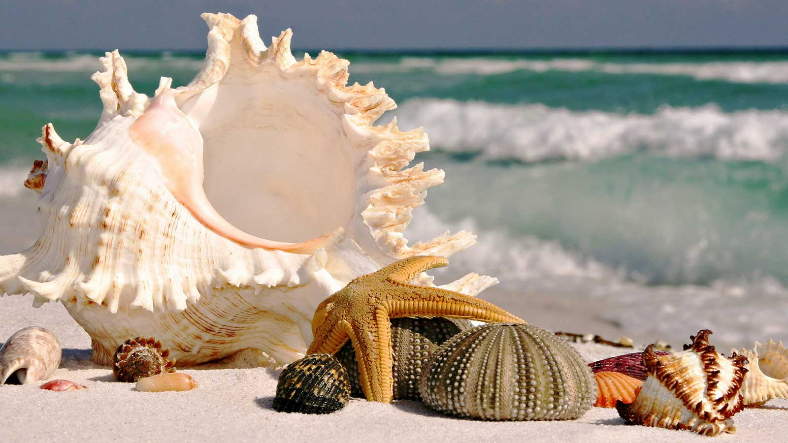 Beautiful and Different Types of shell on Beach