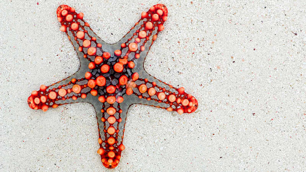 Different types of starfish: 5 incredible sea star species