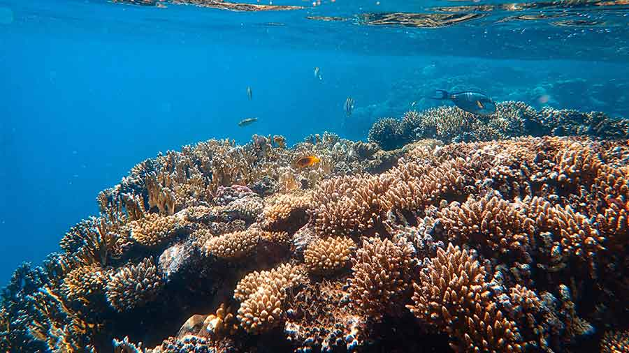 Snorkelling a Coral Reef in Dahab