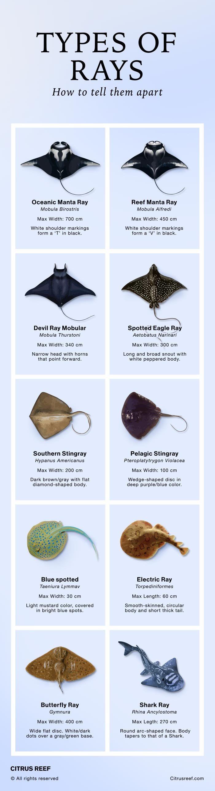 Types of Rays – Different Species