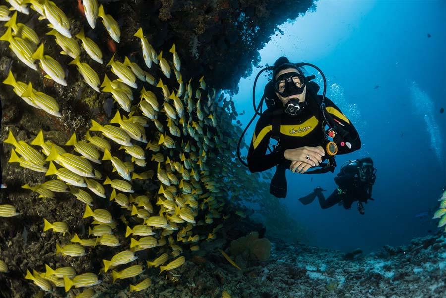 female scuba diver and coral reef with a group of fusiliers