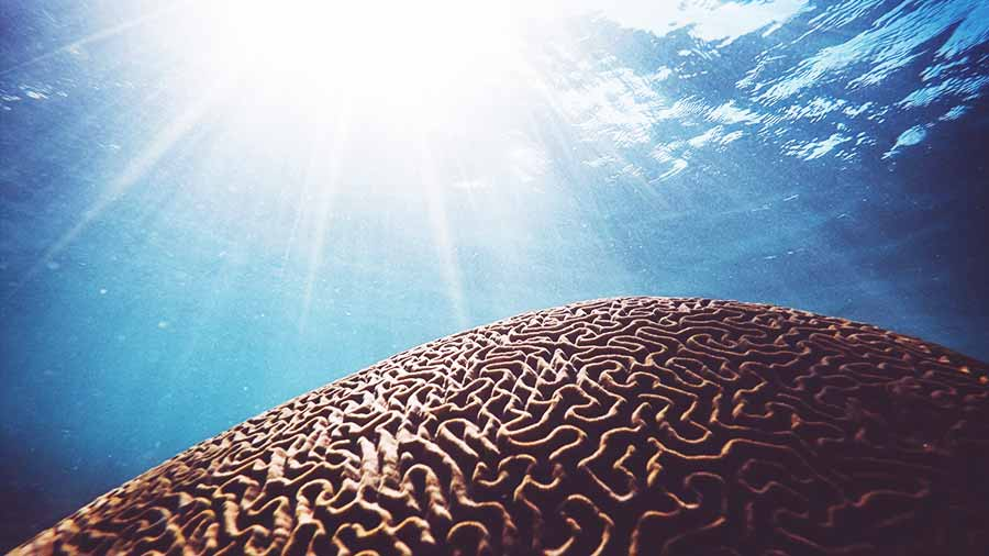 sunlight shining on brain coral in shallow water