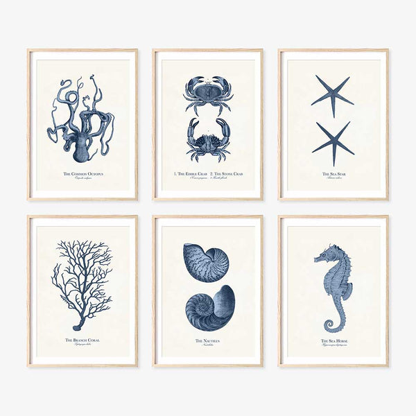 Collection of framed Vintage Sea Life Prints on wall