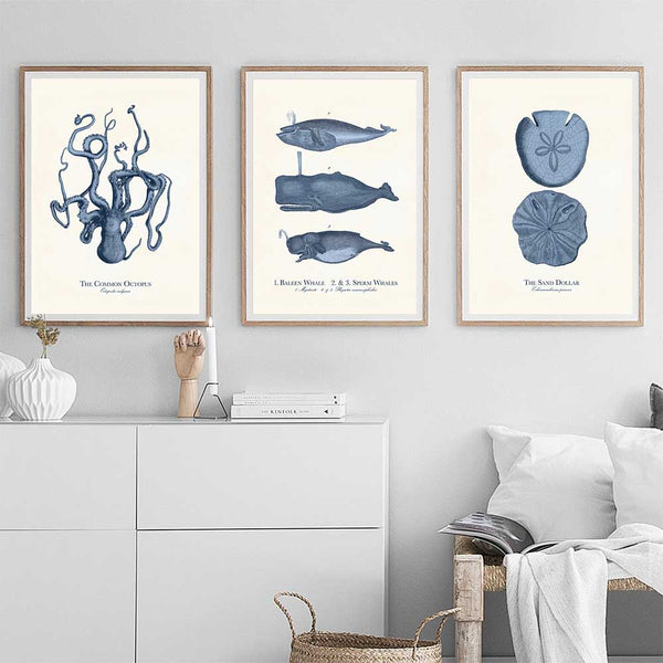 Three Sea Life canvas prints on living room wall