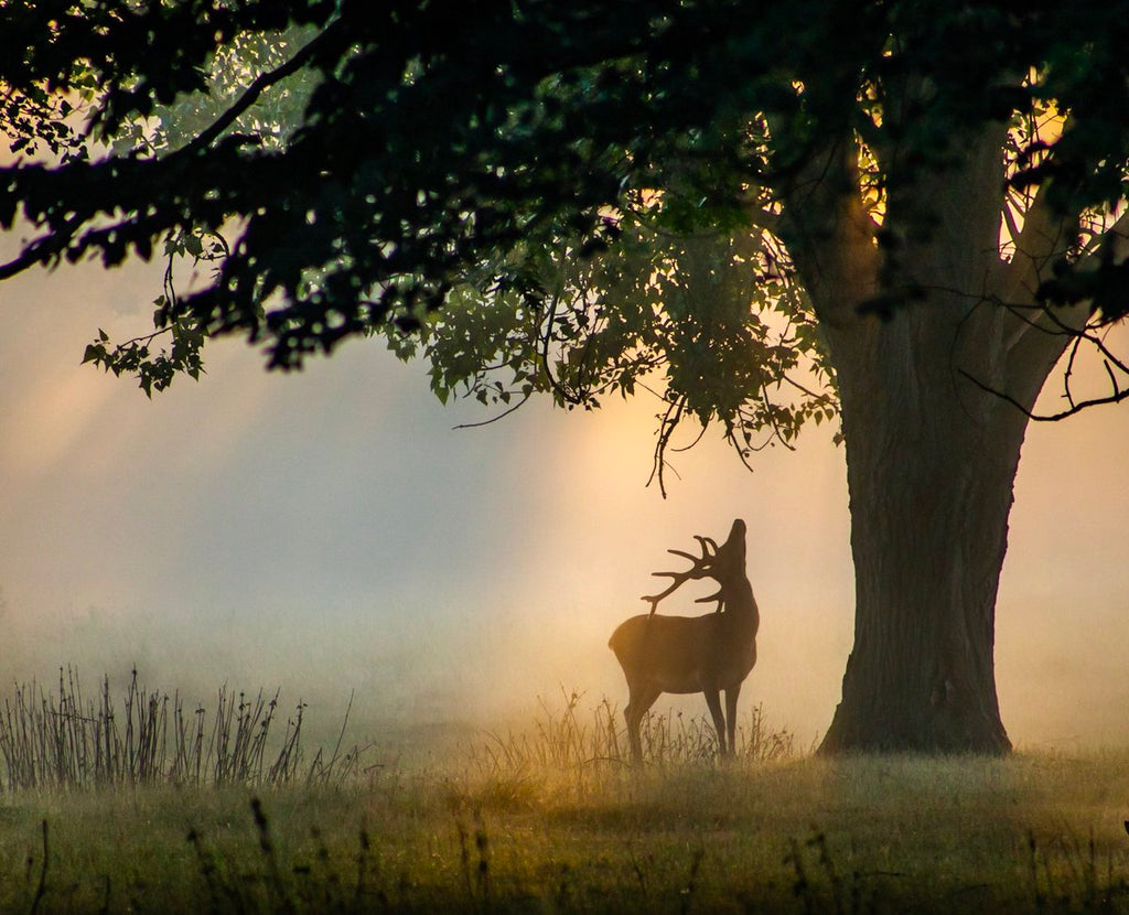 A stag in Bushy Park, London by David @David_Photos_UK