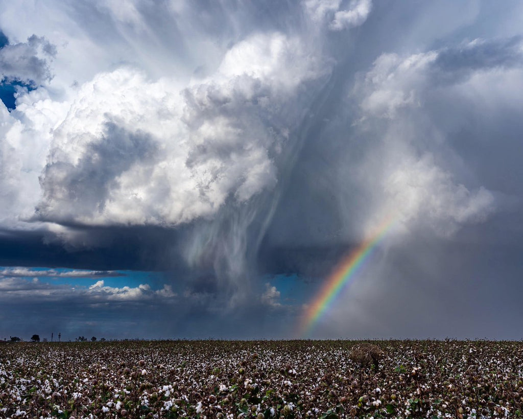 Thunderstorm and rainbow over a cotton field near Eloy, AZ by Kyle Benne @KyleBenne