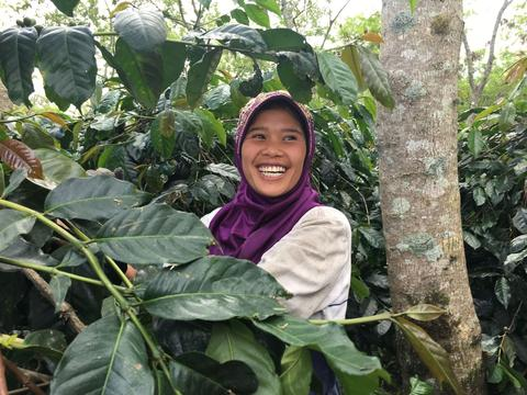 Sumatra Coffee - Women Coffee Producers
