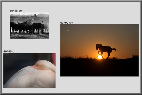 Photographies de Camargue de Vincent Recordier