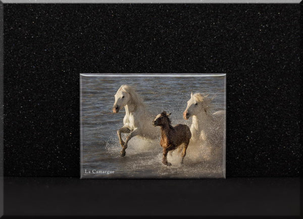 Magnet poulain Camargue et ses parents