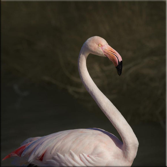Flamants roses en Camargue