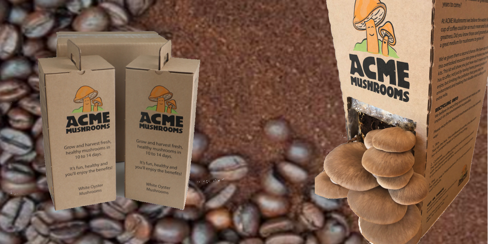Acme Mushrooms health food home grown coffee waste recycling  education fund-raising fundraising mushroom kits oyster mushrooms