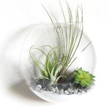Load image into Gallery viewer, Wall Hanging Terrarium