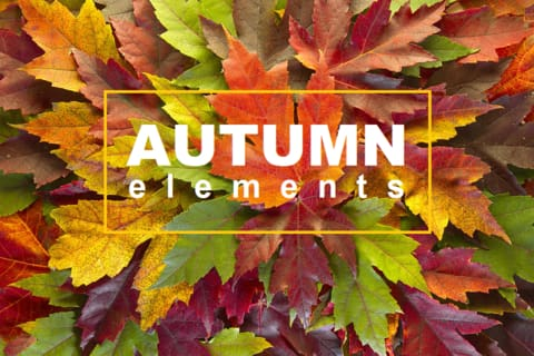 Autumn Elements: Thanksgiving