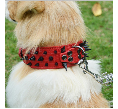 Leather Dog Collar & Spring Chain sets