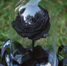 Load image into Gallery viewer, Preserved eternal rose Montreal flowerbox noel Valentine's Florist fleuriste Belle et bete beauty beast glass dome eternelle