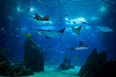Oceanarium Lisbon. Things to do in Lisbon with kids when it rains. Indoor activities for kids in Lisbon. Best kid-friendly indoor activities in Lisbon. Family indoor activities in Lisbon. What to do and where to go in Lisbon with kids when it rains. Museums in Lisbon for kids. Visit lisbon with kids.