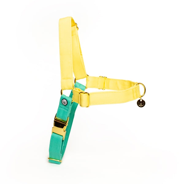 Lemon-Seafoam No-Pull Harness