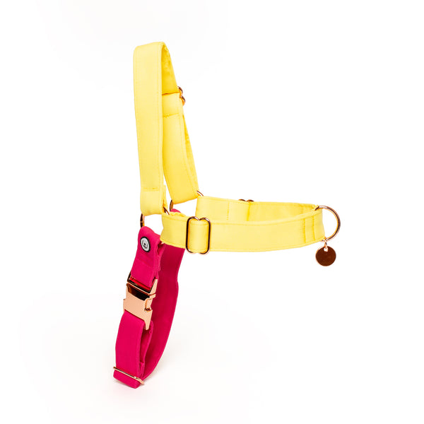 Lemon-Magenta No-Pull Harness
