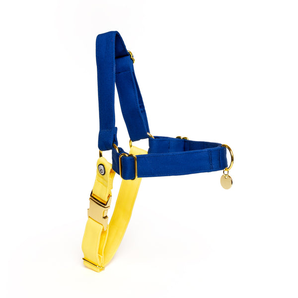 Blue-Lemon No-Pull Harness