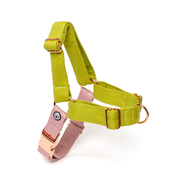 Pickle-Rose No-Pull Harness Set