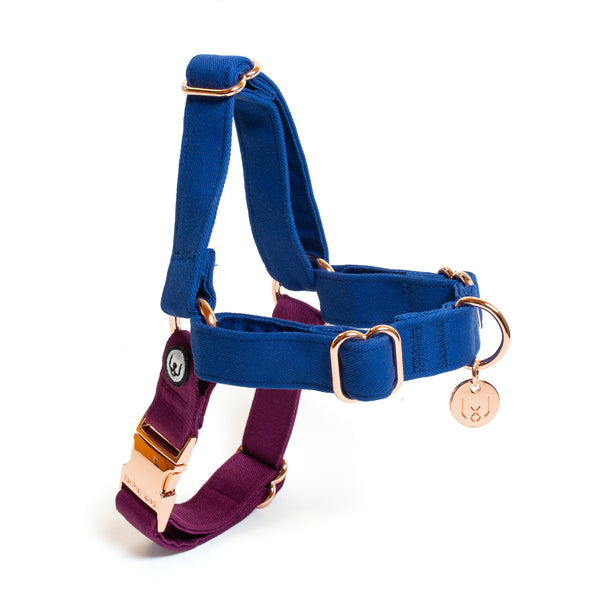 Blue-Plum No-Pull Harness