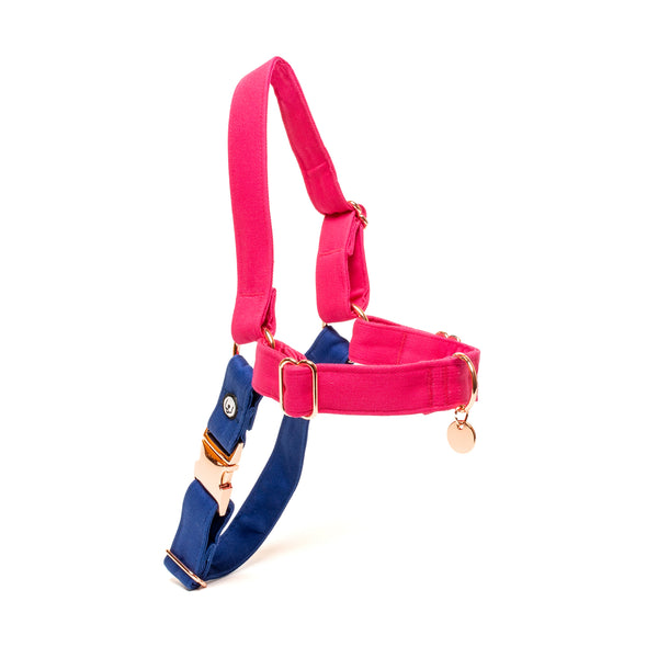 Magenta-Blue No-Pull Harness