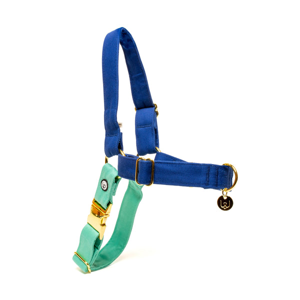 Blue-Seafoam No-Pull Harness