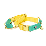 Lemon-Seafoam Collar