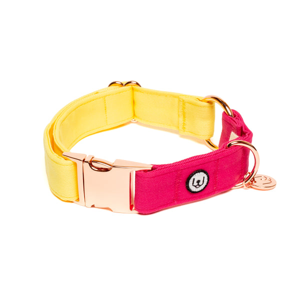 Lemon-Magenta Collar