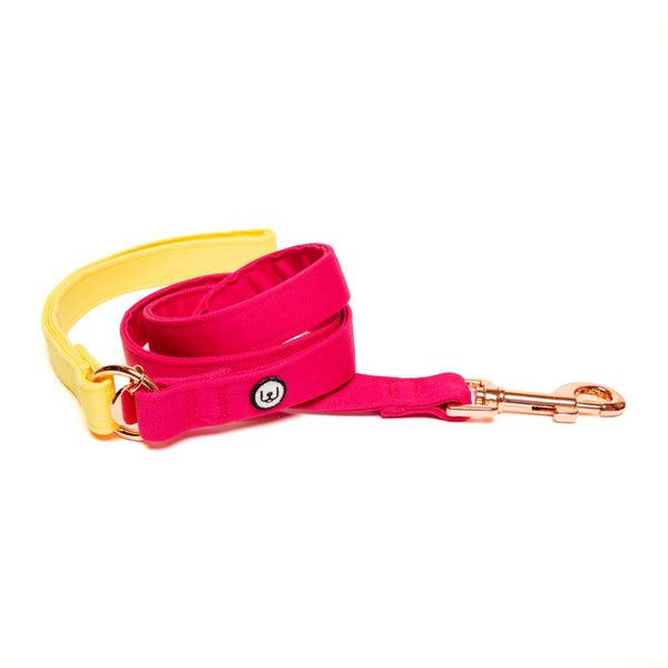 Lemon-Magenta Leash