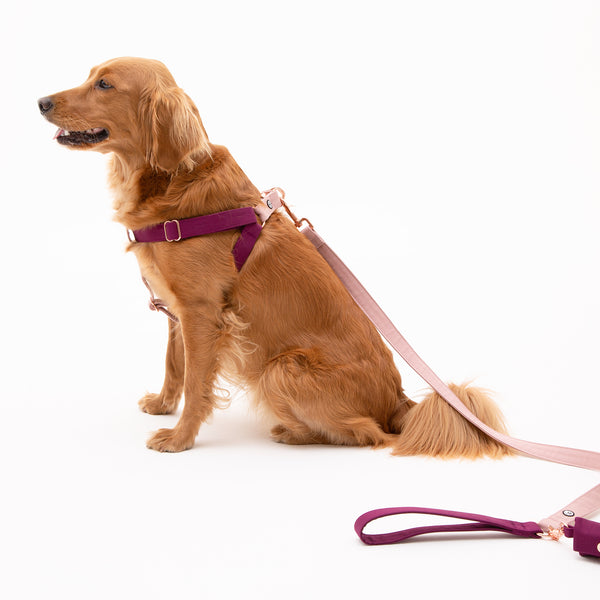 Plum-Rose Step-In Harness
