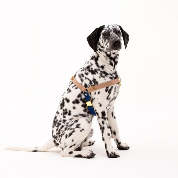 Fawn-Blue No-Pull Harness