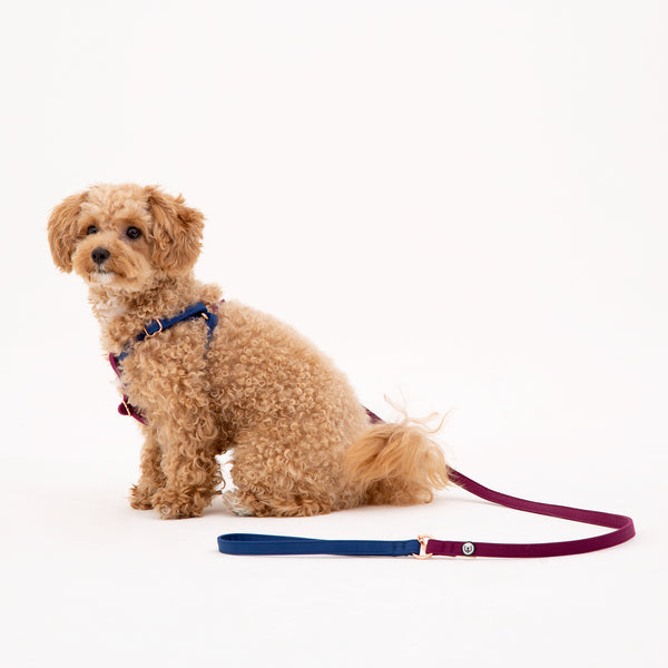 Blue-Plum Leash