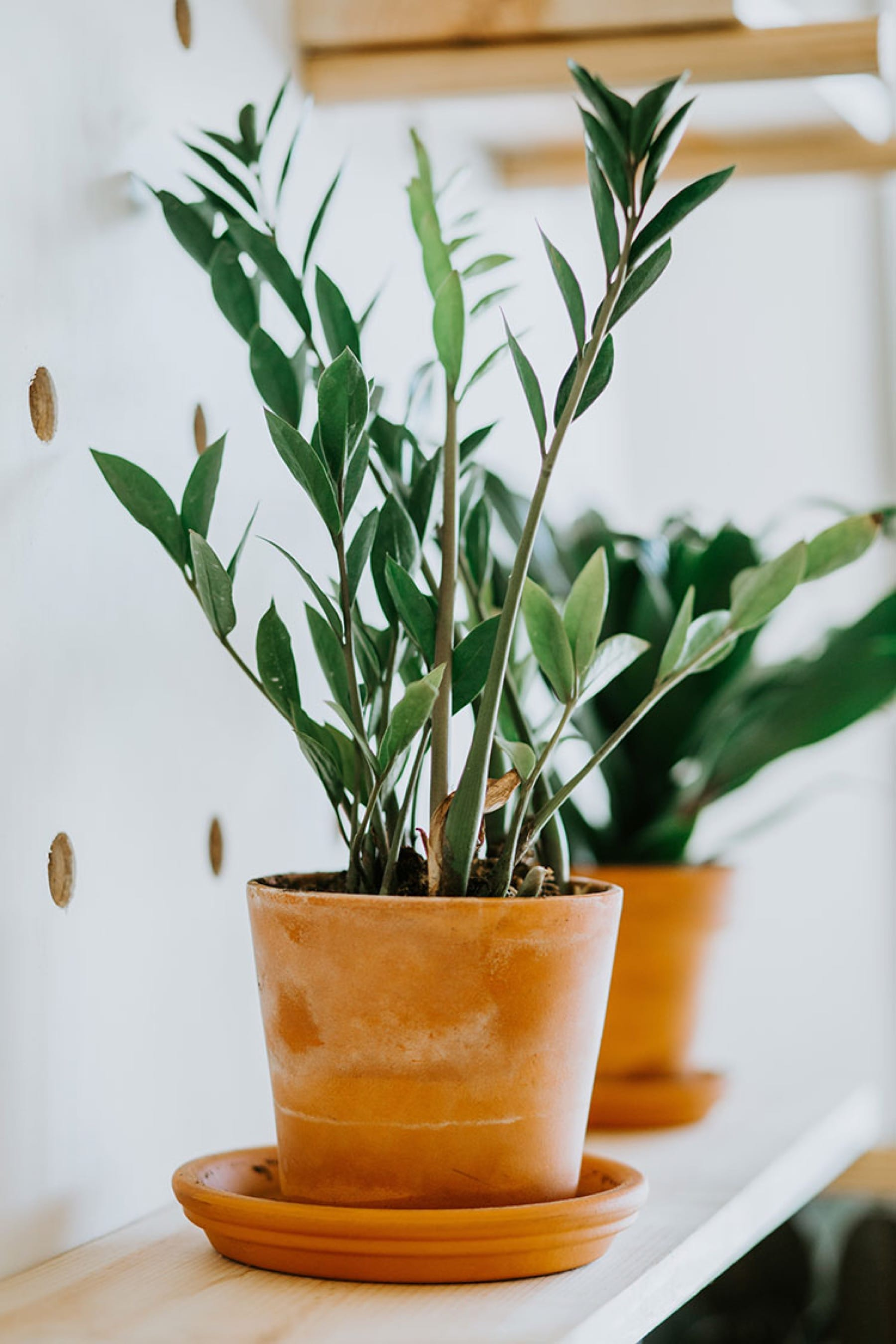 green plant for home