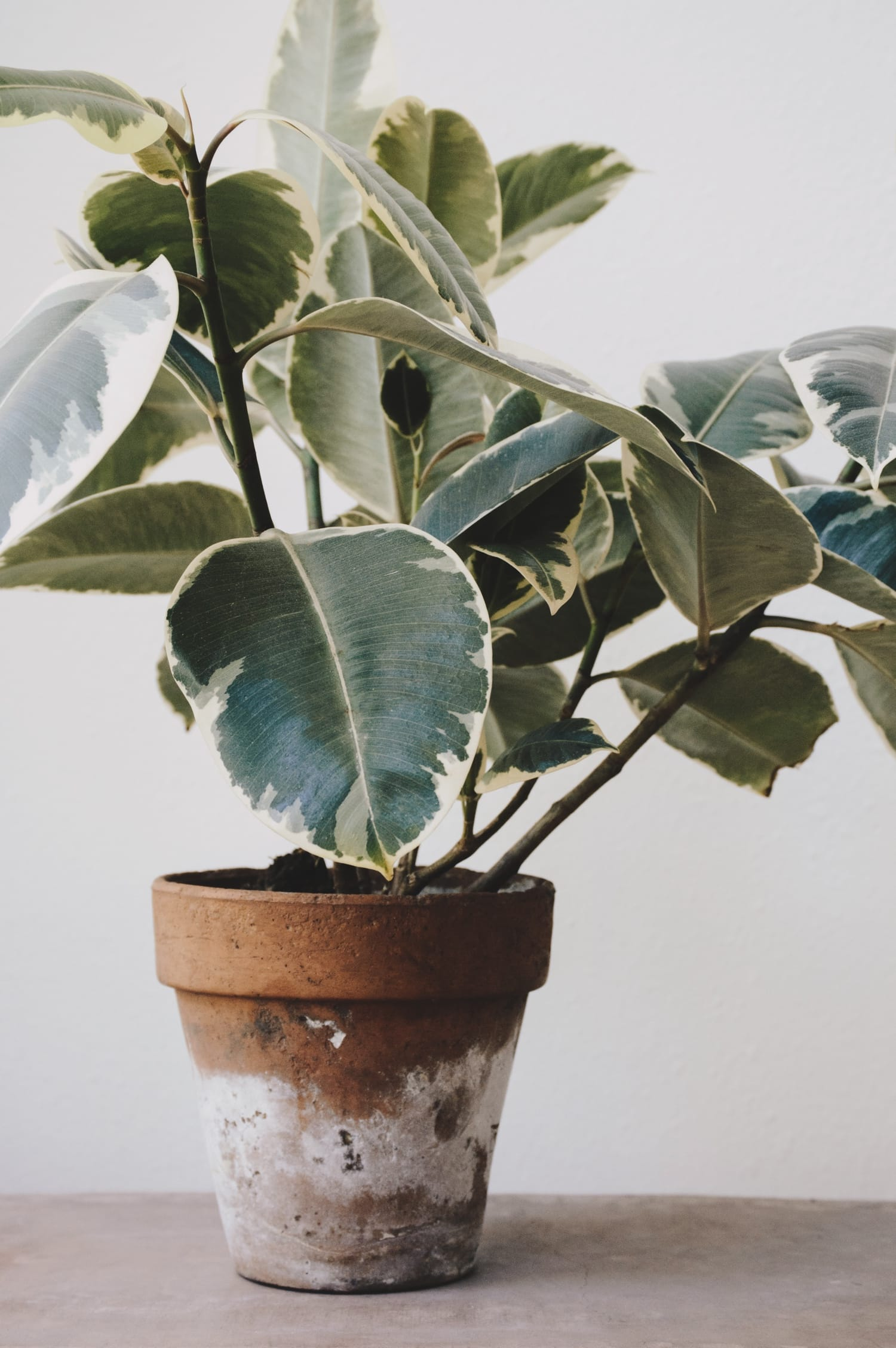 plant for air quality