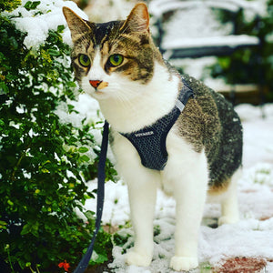"Voyager ""Step In"" - Cat Harness"