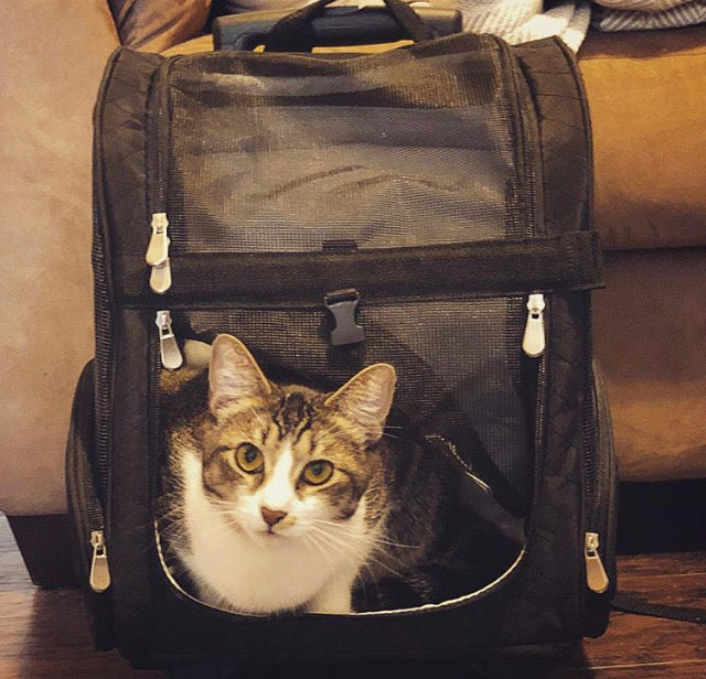 4-In-1 Cat Travel Carrier Backpack