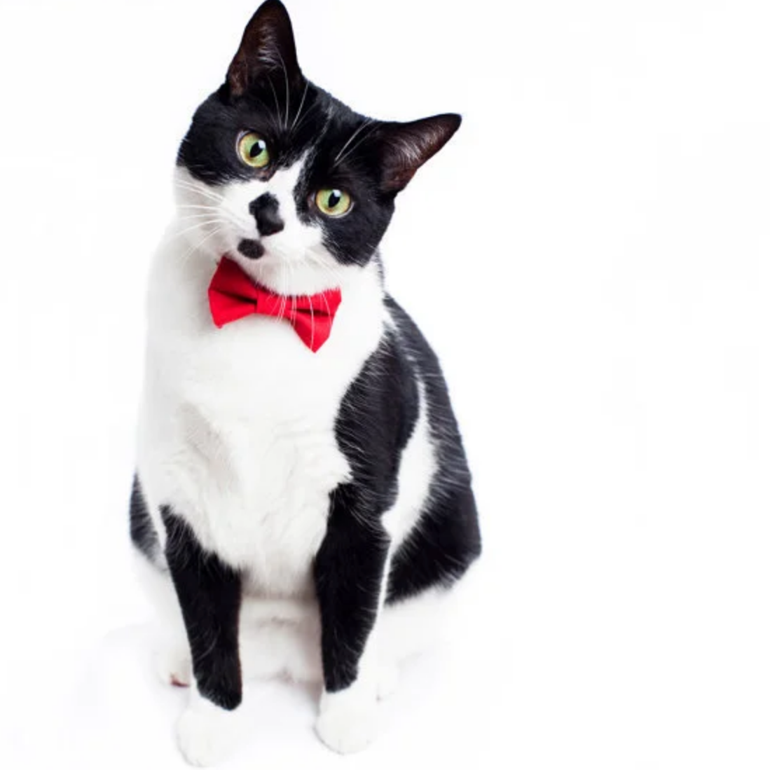 Cat Bow Ties