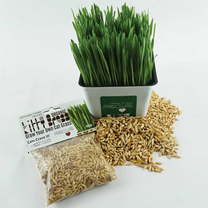 """Grow Your Own Kitty Grass"" - Seed Pack (Choose 3 oz or 6 oz)"