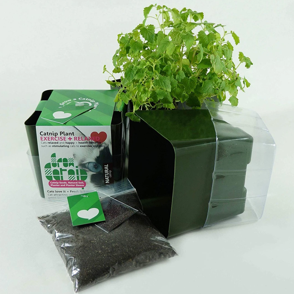 """Grow Your Own Catnip Plant"" - Cat Treat"