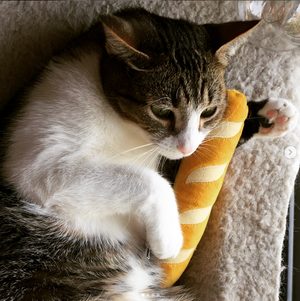 """Baby Baguette"" - Catnip + Silvervine Cat Toy"