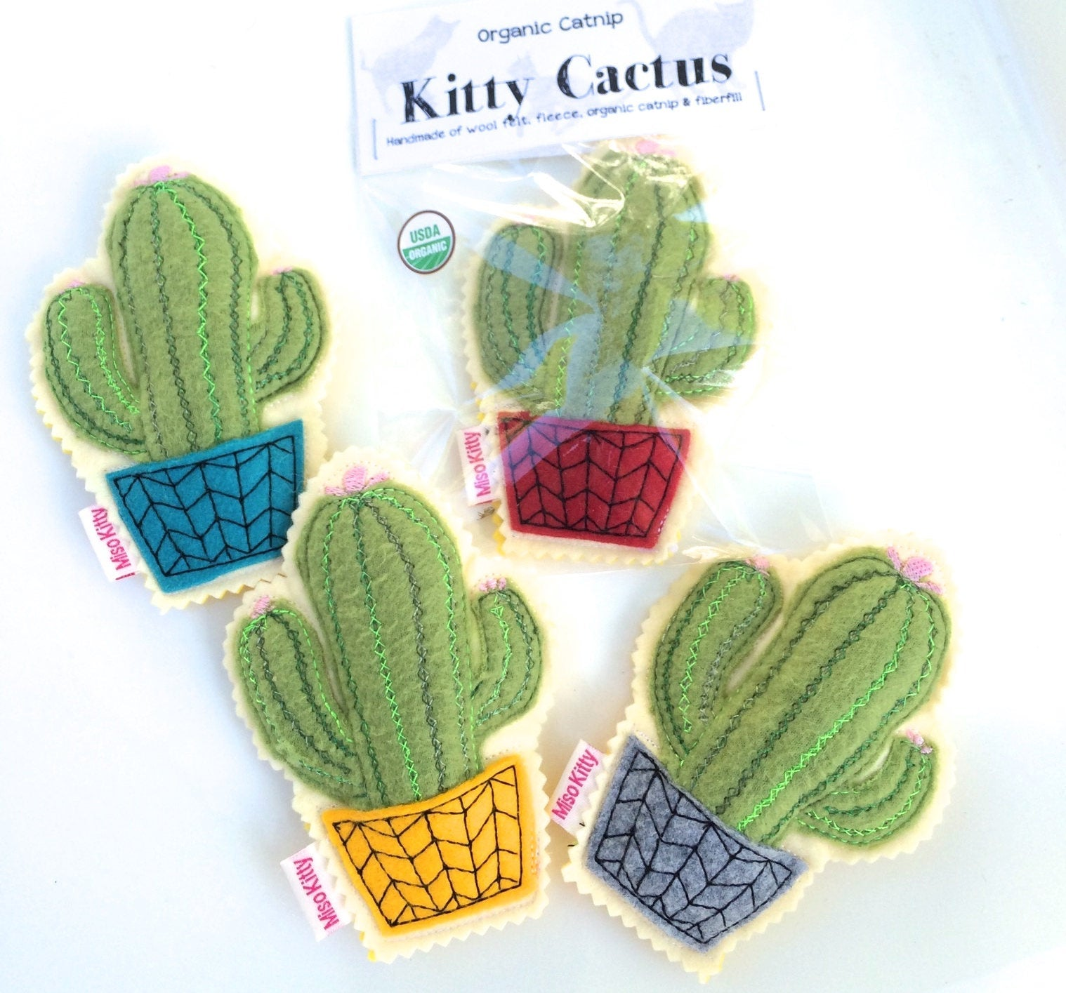 Kitty Cactus