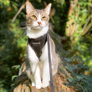 """Puppia Soft Harness"" - Cat Harness"