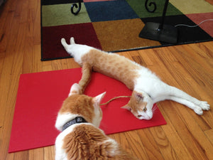 Yoga Cat Mat [Free USA Shipping]