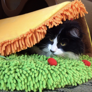 """Taco Cat Bed""[Free USA Shipping]"