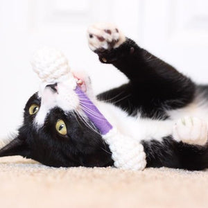 """Catnip Q-Tip"" - Cat Toy"