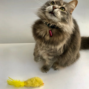 """Catnip Canary"" - Cat Toy"