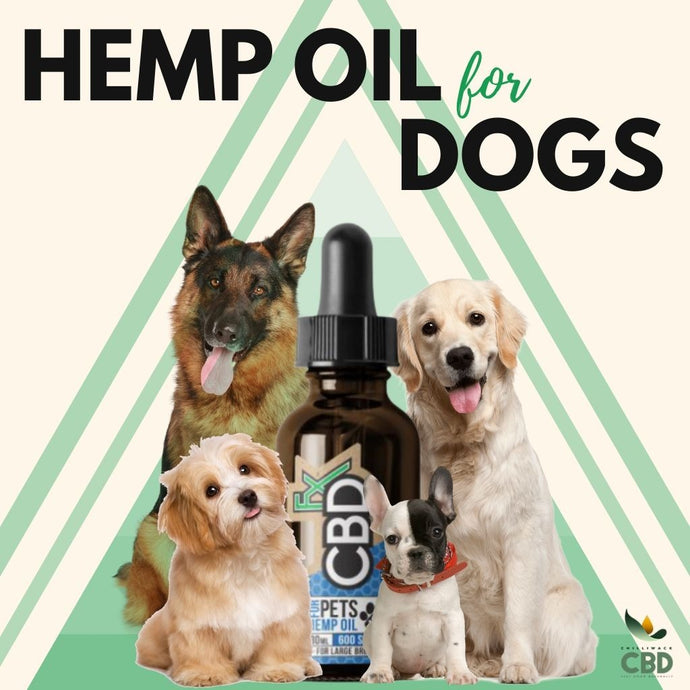 Hemp Oil For Dogs!