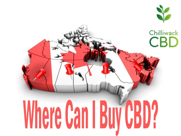 Where can I buy CBD?
