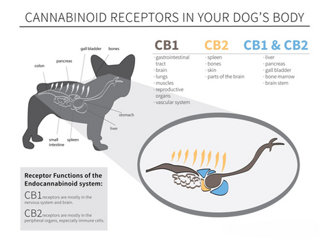 cbd oil for dogs canada